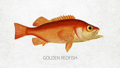 Angling Digital Art - Golden Redfish by Aged Pixel