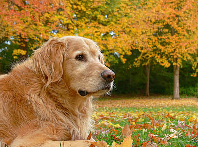 Golden Retriever Dog Autumn Leaves Print by Jennie Marie Schell