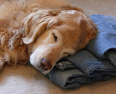 Golden Retriever Dog Forever On Blue Jeans Print by Jennie Marie Schell