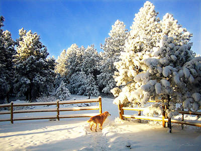 Golden Retriever Dog In Snow Print by Julie Magers Soulen