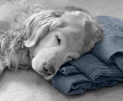 Golden Retriever Dog Forever On Blue Jeans Monochrome Print by Jennie Marie Schell