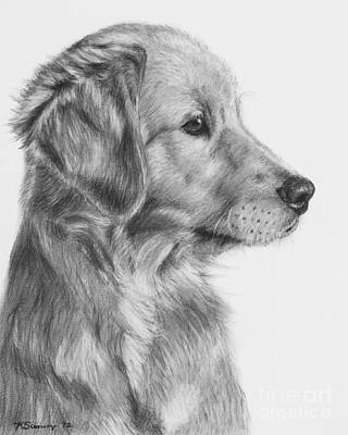 Purebred Drawing - Golden Retriever Puppy In Charcoal One by Kate Sumners