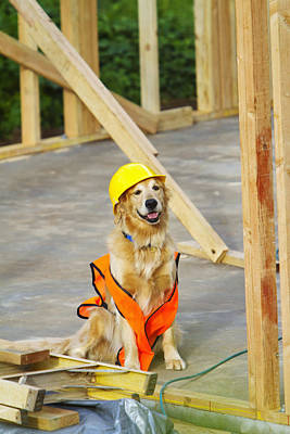 Hawaii Dog Photograph - Golden Retriever Supervising by Ron Dahlquist