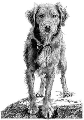 Retrievers Drawing - Golden by Rob Christensen