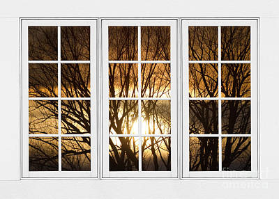Corporate Art Photograph - Golden Sun Silhouetted Tree Branches White Window View by James BO  Insogna