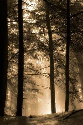Golden Sunrise In The Forest Print by Dan Sproul