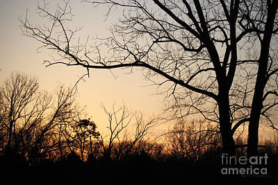 Golden Sunset Print by Todd A Blanchard