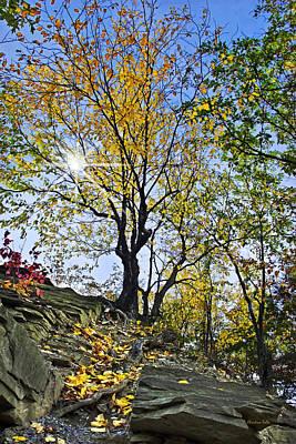 Buttermilk Photograph - Golden Tree by Christina Rollo