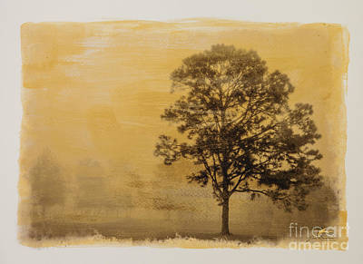 Gold Tone Photograph - Golden Trees 25- Special Printing Process - On Gold by Jim Swallow