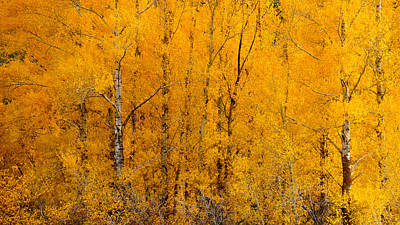Nature Photograph - Golden Trees by Southwindow Eugenia Rey-Guerra