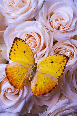 Yellow Butterfly Photograph - Golden Wings On Roses by Garry Gay