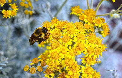 Golden Yarrow And Visitor Print by Sandi OReilly
