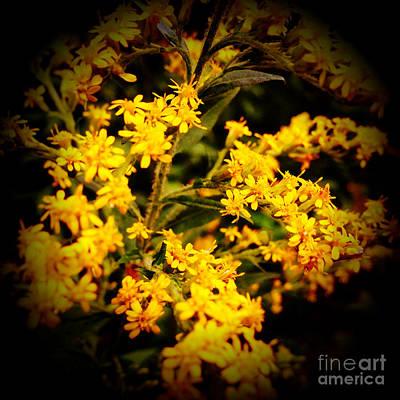 Flower Photograph - Goldenrod by Cristina Stefan