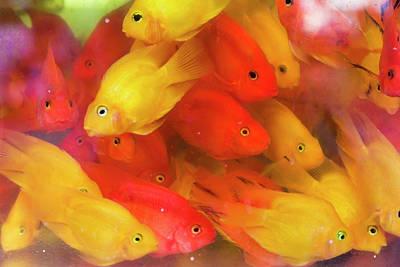 Goldfish Photograph - Goldfish At Goldfish Market, Hong Kong by Peter Adams