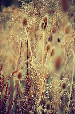 Golgen Shades Of Wild Grass Print by Jenny Rainbow
