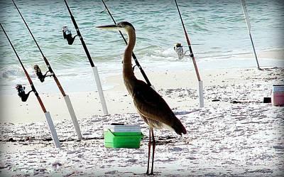 Blue Herron Photograph - Gone Fishing by Debra Forand