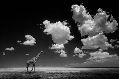 Wildlife Landscape Photograph - Gone With The Clouds by Alberto Ghizzi Panizza