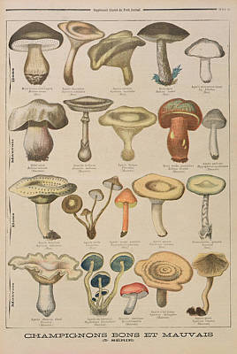 Mushroom Drawing - Good And Bad Mushrooms by French School