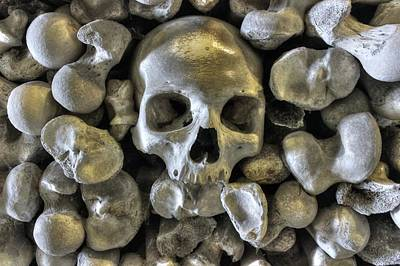 Skull Photograph - Good Bonesstructure by Ian Hufton
