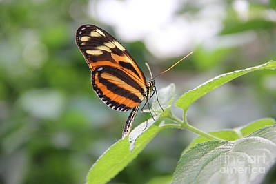Good Morning Butterfly Print by Jackie Mestrom