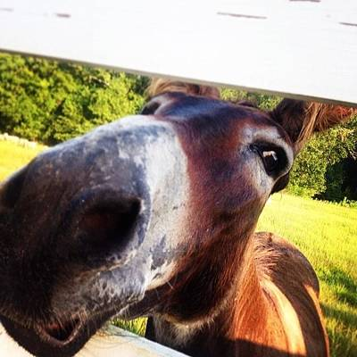 Rural Scenes Photograph - Good Morning People!! Donkey Says Hello by Scott Pellegrin