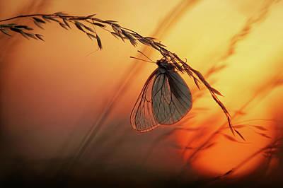 Autumn Photograph - Good Night by Francois Casanova
