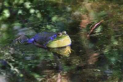 Bullfrogs Photograph - Good Vibrations by Donna Kennedy