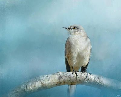 Mockingbird Photograph - Good Winter Morning by Jai Johnson