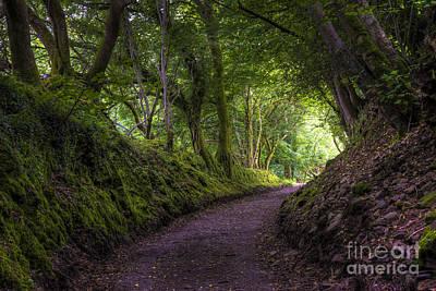 Pathway Digital Art - Goodameavy Arbour by Donald Davis