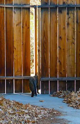 Cat Photograph - Goodbye Winston 2 by Brent Dolliver