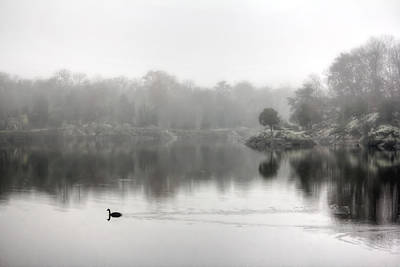 See Fog Photograph - Goose Crossing Foggy Water In Maryland by Francis Sullivan