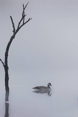 Geese Photograph - Goose Of The Fog by Bill Wakeley