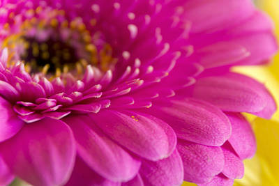 Gorgeous Pink Flower Print by Dana Moyer
