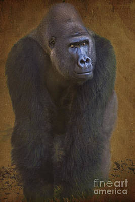 Biologic Photograph - Gorilla The Muscleman by Heiko Koehrer-Wagner