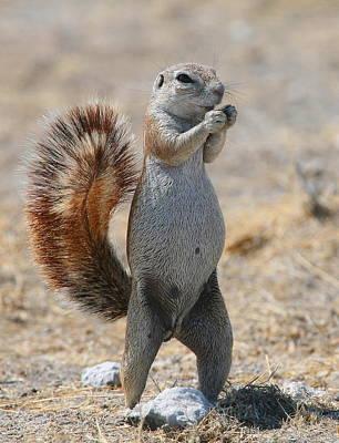 Got Nuts?  Print by Bruce J Robinson