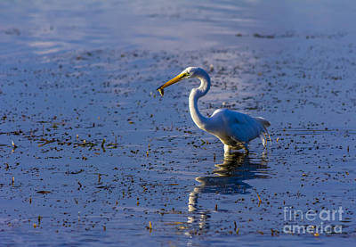 Wading Bird Photograph - Gotcha by Marvin Spates
