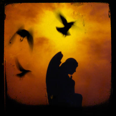 Fluttering Digital Art - Gothic Silhouette by Gothicolors Donna