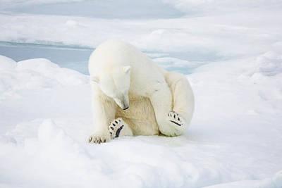 Arctic Photograph - Gotta Itch by Anita Oakley