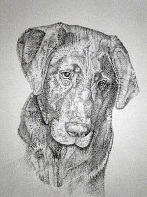 Black Labrador Drawing - Gozar by Mayhem Mediums