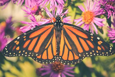 Fluttering Photograph - Grace And Beauty by Viviana  Nadowski