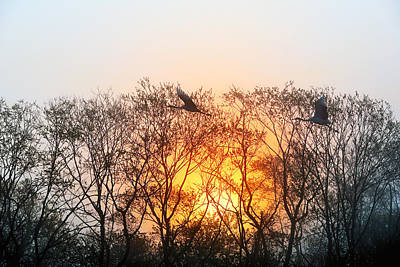 Tsuru Photograph - Graceful Crane In Morning Sun by Yoshiki Nakamura