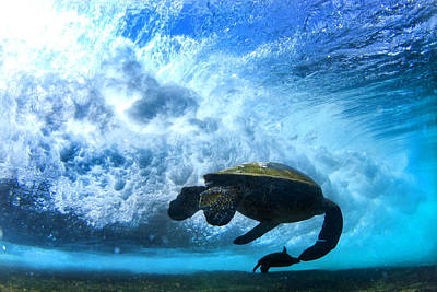 Hawaii Sea Turtle Photograph - Grace Under The Waves by Sean Davey