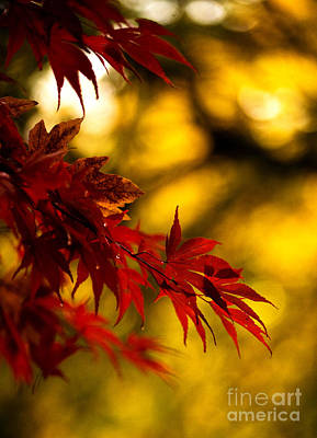 Fall Colors Photograph - Graceful Leaves by Mike Reid