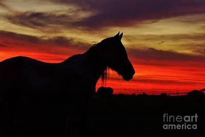 Gracie At Sunset Print by Lynda Dawson-Youngclaus