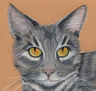 Gray Tabby Drawing - Gracie by Jamie Frier