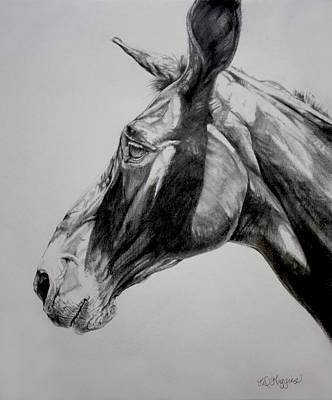 Donkey Drawing - Grand Canyon Mule by Derrick Higgins
