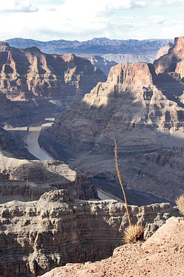 Grand Canyon Print by Yosi Cupano