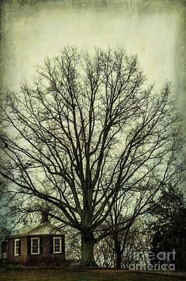 Uva Photograph - Grand Old Tree by Terry Rowe