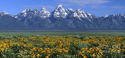 Wyoming Photograph - Grand Teton Summer by Sandra Bronstein