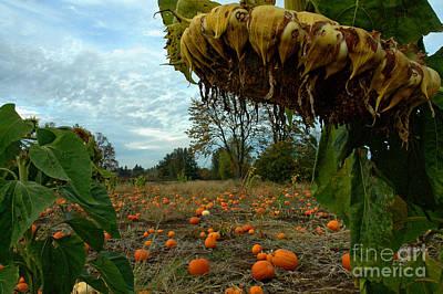 Grandpa's Pumpkin Patch Print by Nick  Boren
